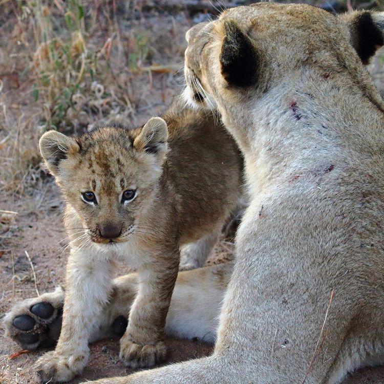 The Africa Safari Co